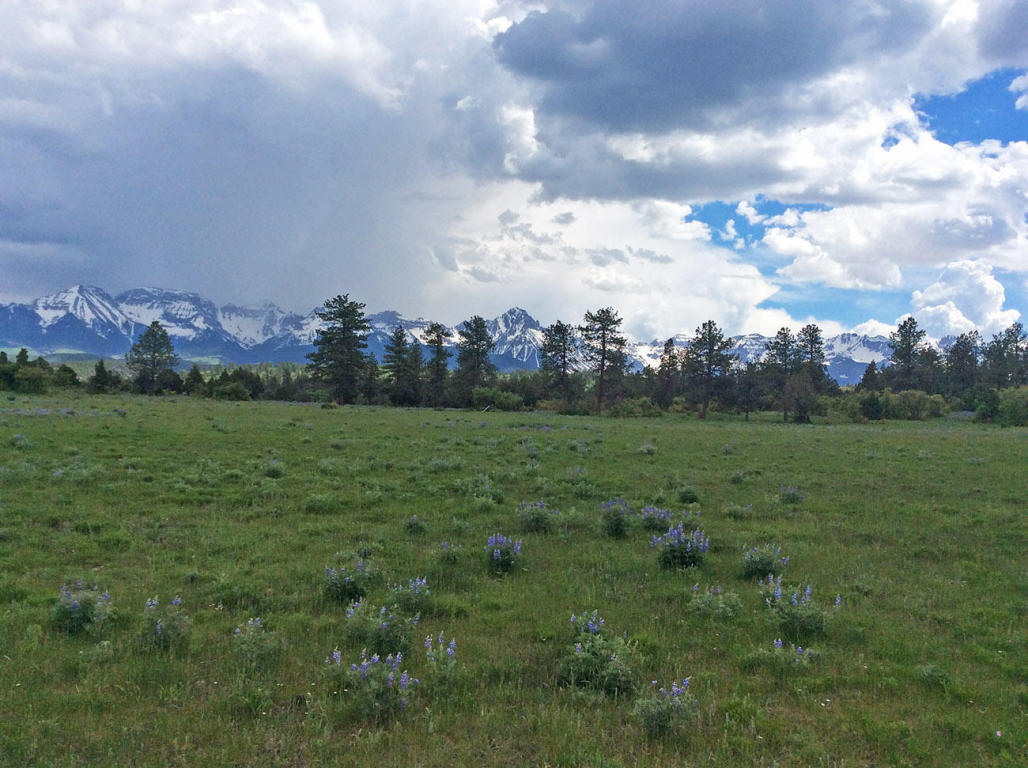 Ridgway Property for Sale