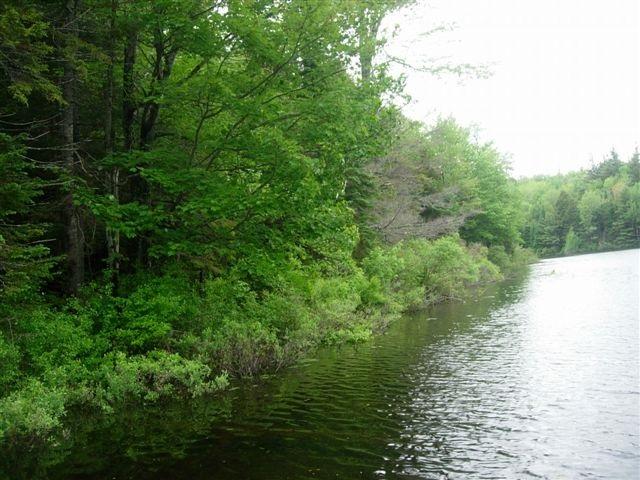 Halfmoon Pond