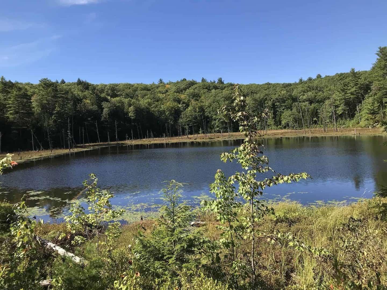 Shaws Pond, NH